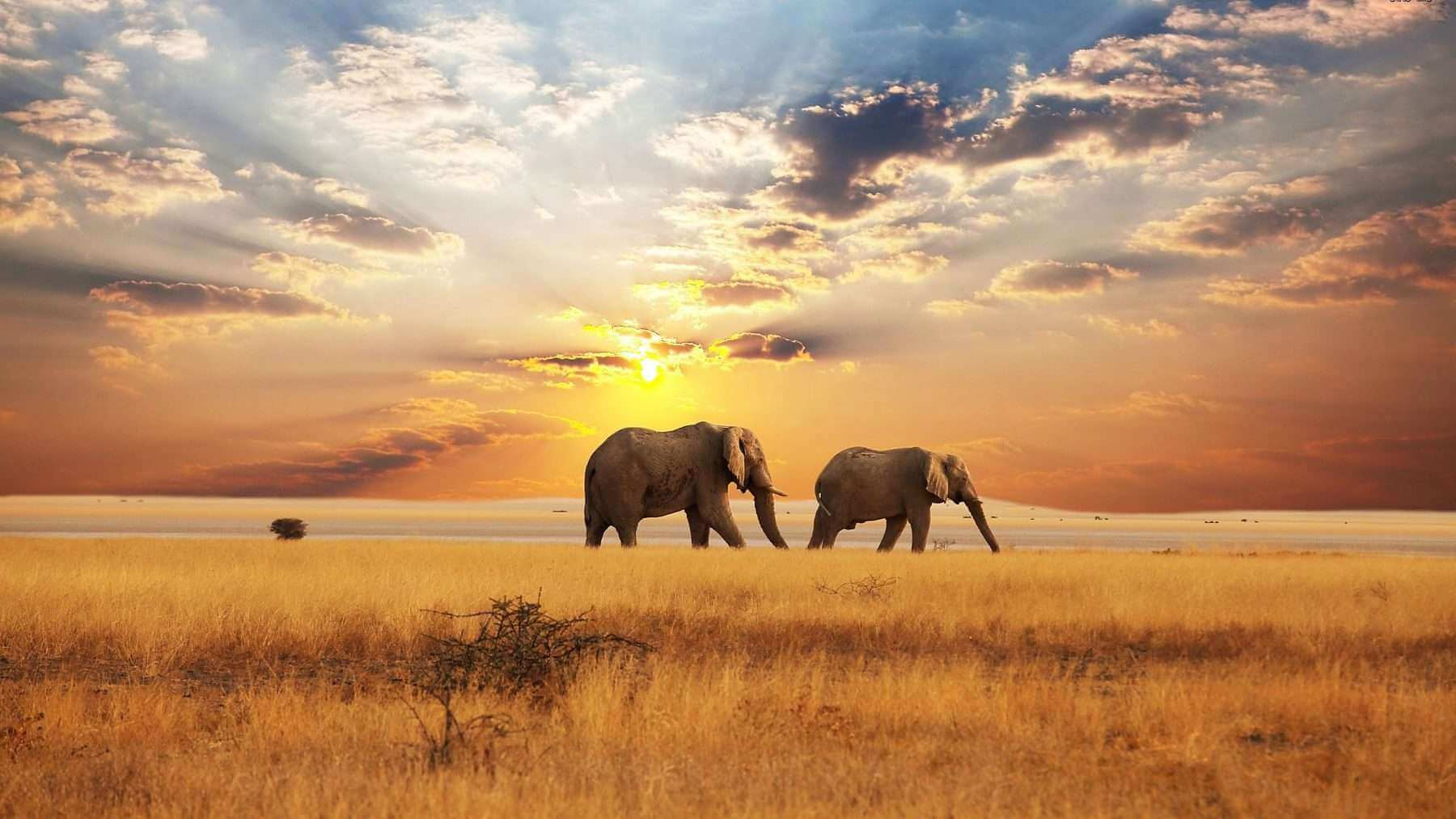 Travel guide blog to Africa