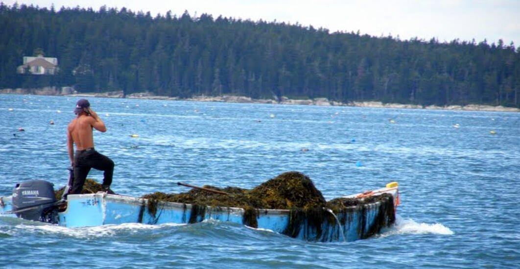 I paid for my trip around the world from harvesting seawood off the coast of maine one summer. It was the funnest and most boringest job I ever had. I made $400 a day raking seaweed off the tidal shorelines.