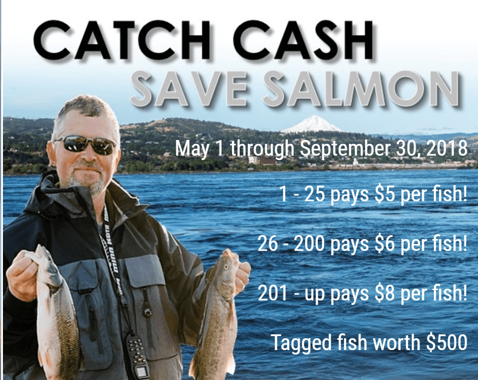 The state of Washington will pay you to catch Northern Pikeminnow fish over nine inches. Catch your travel money in the state of Washington this summer