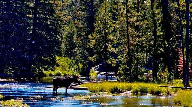 Alaskan Moose Travel Adventures