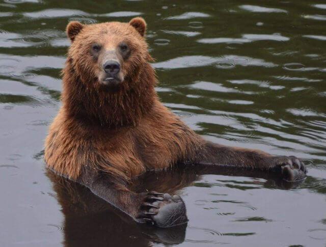 Bear Travel Adventures in Alaska