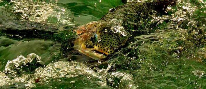 Summertime Fishing Adventure destinations in Alaska or ketchikan