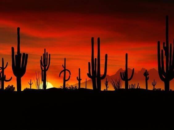 arizona sunset rv living